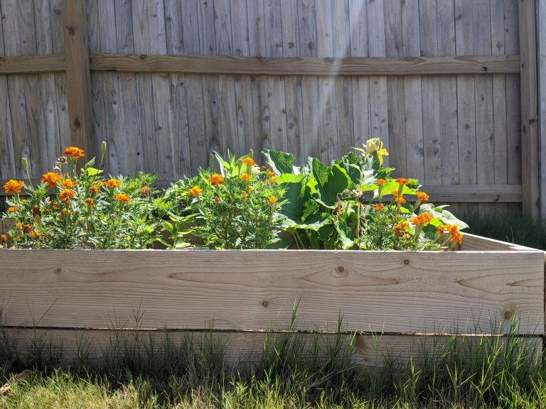 Read more about the article The 5 Vegetable Gardening Mistakes Beginners Should Avoid