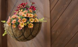 How to Plant a Hanging Basket in 6 Simple Steps