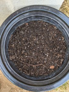 starting soil mix for cucumbers in a pot