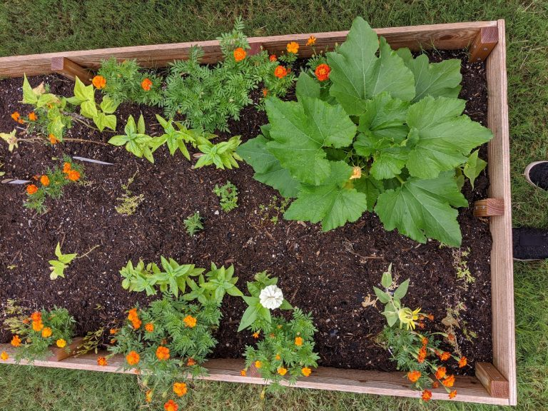 a long raised garden bed with veggies