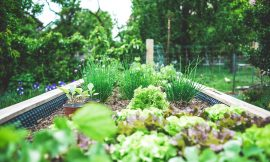 The Top 5 Things You Need to Know Before Building A Raised Garden Bed