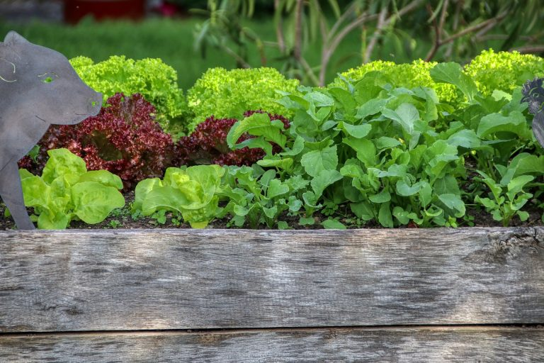 side of a vegetable raised garden bed