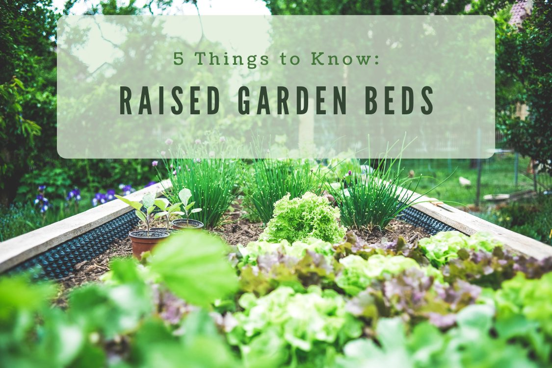 raised garden bed with vegetables